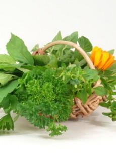 comment bien utiliser les fines herbes tout savoir sur les herbes aromatiques nutrition. Black Bedroom Furniture Sets. Home Design Ideas