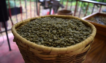 Huile essentielle de café : un puissant allié pour votre santé