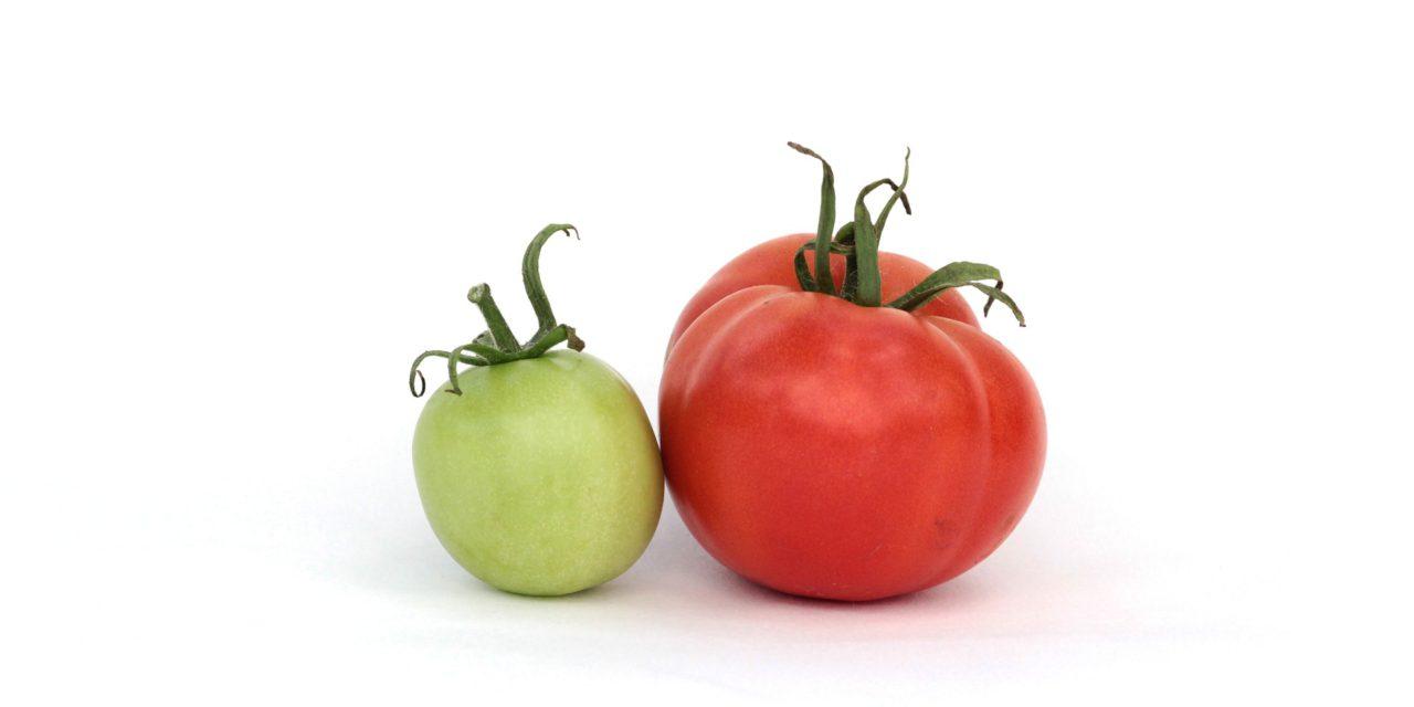 La solanine, ce poison caché dans les tomates et les tubercules