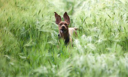 Au printemps, courez et gagnez avec votre chien