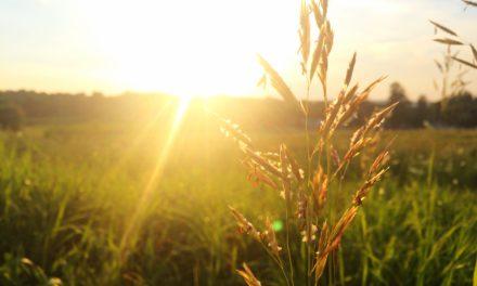 Où trouver de la vitamine D quand il n'y a pas de soleil ?
