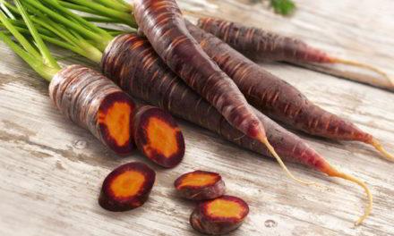 La carotte violette : une source de santé à redécouvrir
