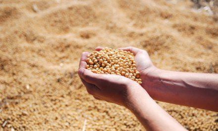 Les atouts des graines de soja
