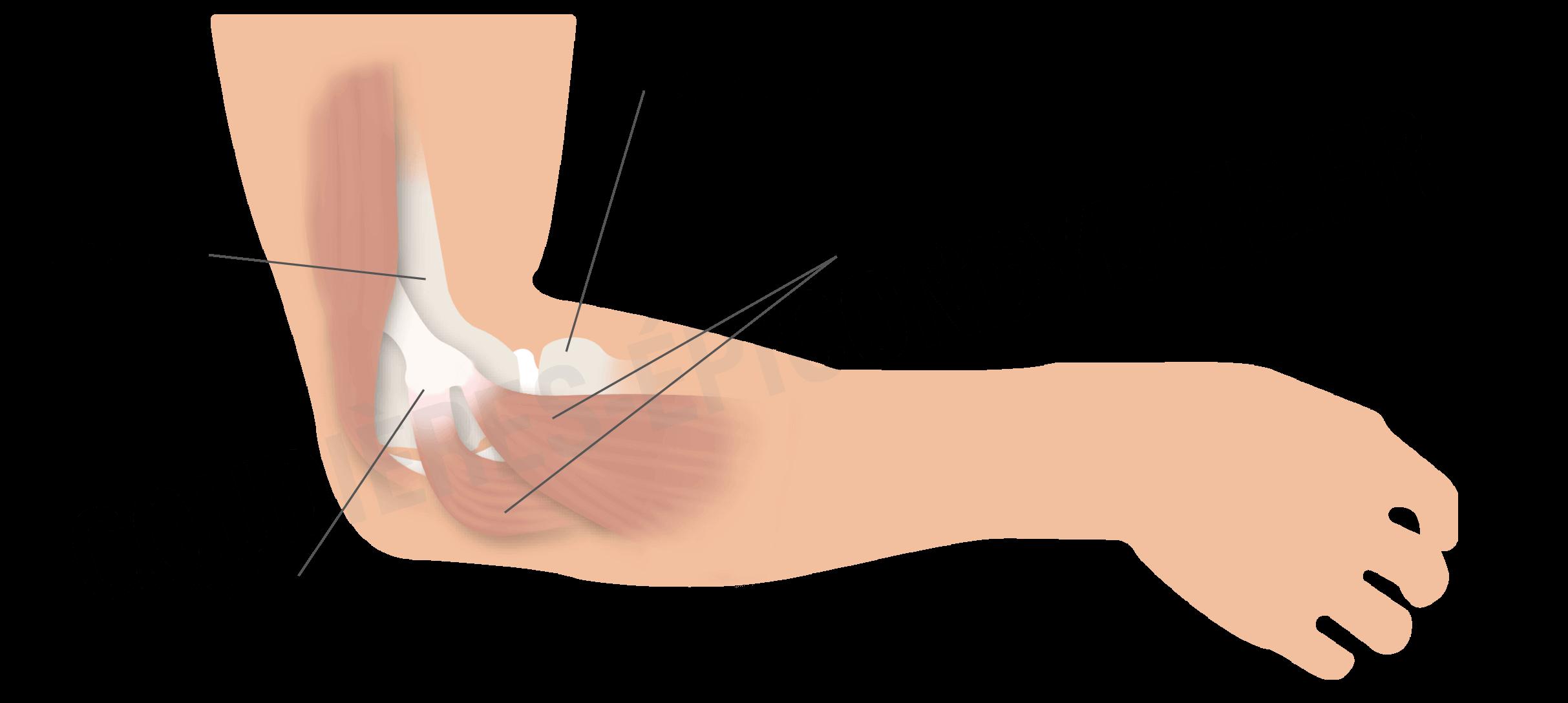 Vue détaillée de l'articulation du coude